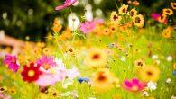 En la primavera es muy normal tener cansancio, sentirnos con poca vitalidad, por eso hoy vamos a hablar de: Cansancio, fatiga y agotamiento Es un estado de debilidad física que […]