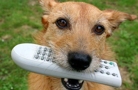 Tener un perro en casa siempre conlleva una gran responsabilidad. Hay que cuidar de ellos procurándoles una alimentación sana, vacunarlos, sacarlos a pasear y proporcionarles mimitos cuando sea necesario. Pero […]