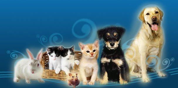 Todos los que tenemos la suerte de tener a nuestro lado una mascota sabemos los beneficios que nos aportan, las alegrías que nos proporcionan y también y como no, […]