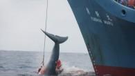 La Corte Internacional de Justicia (CIJ) ha ordenado este lunes a Japón que «revoque» los permisos de caza de ballenas en la Antártida porque no se ajustan […]