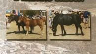El próximo día 30 de agosto de 2014, tendrá lugar en el campo de fútbol de la localidad de Criales de Losa (Burgos), el XXIV Concurso exposición del caballo Losino […]