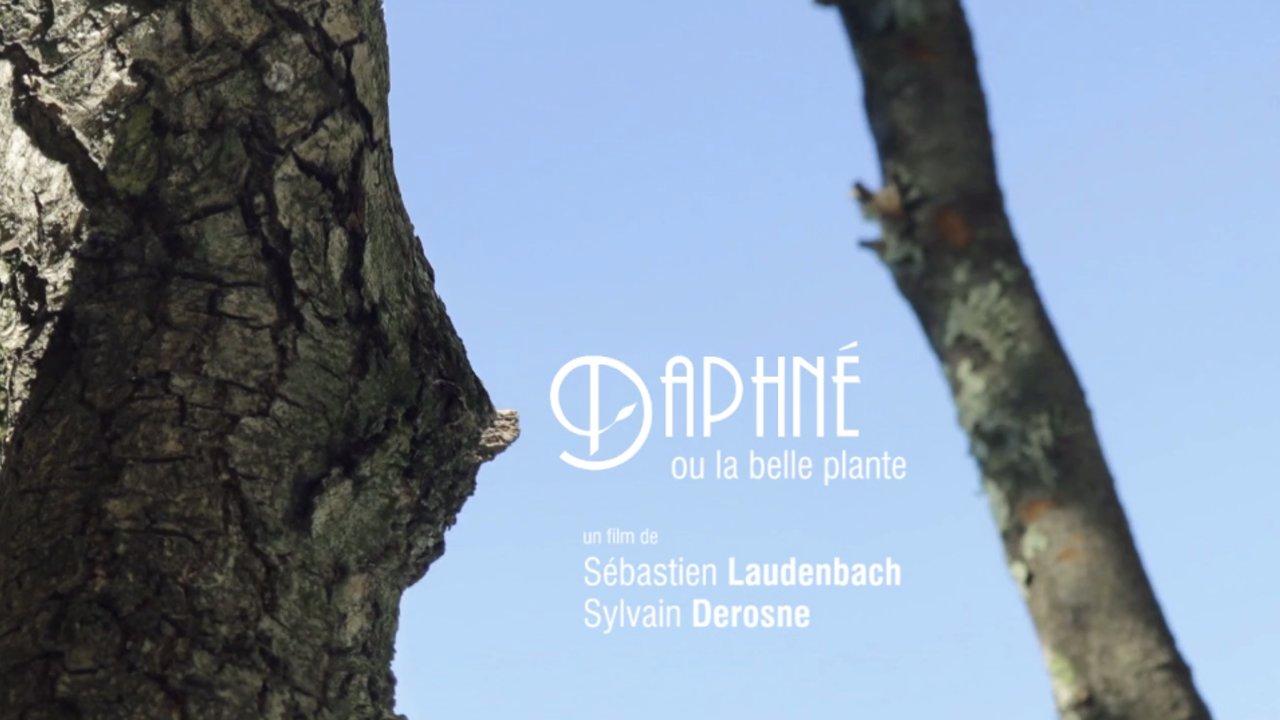 4_Daphnè ou la belle plante