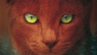 Hoy os presentamos una saga completa protagonizada por gatos. Se trata de la serie de novelas de temática fantástica Los gatos guerreros, escrita por las autoras Kate Cary, Cherith Baldry […]